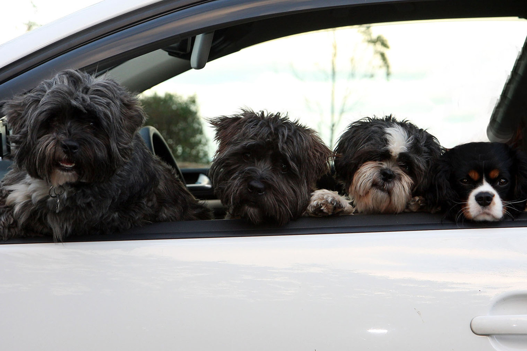 Pet friendly Holidays in Ireland - Dogs on a road trip around Ireland © Trident Holiday Homes