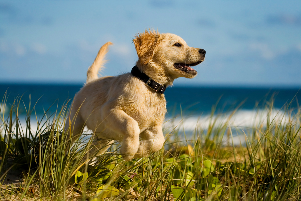 Pet friendly Holidays in Ireland