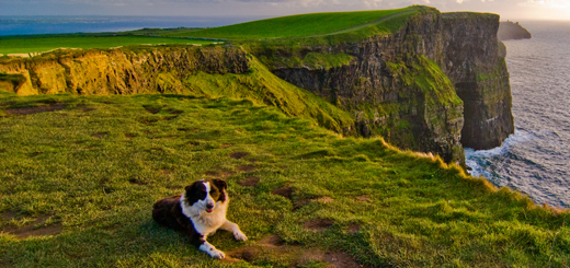 Ten reasons to bring your dog on holidays in Ireland