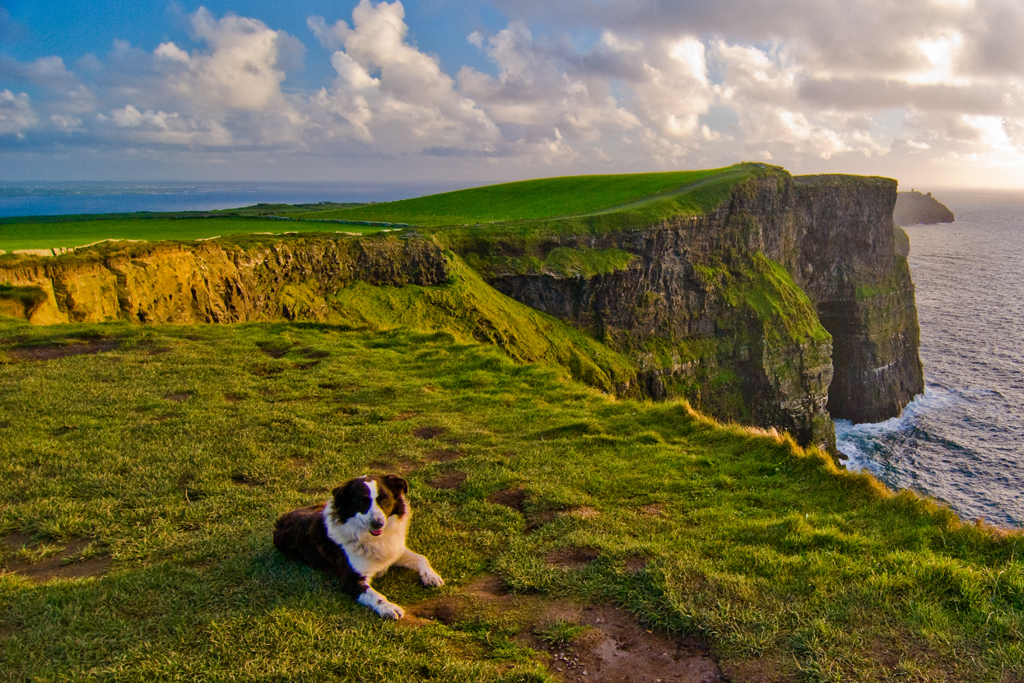 Timmy the dog Cliffs of Moher Clare © Failte Ireland