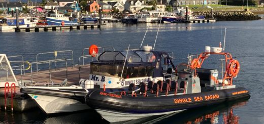 Dingle Sea Safari - Trip Advisory No.1 Experience on the Dingle Peninsula