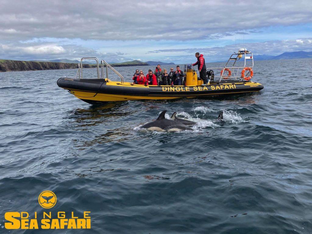 Dingle Sea Safari in County Kerry - Awarded Travellers' Choice on Trip Advisor in 2021