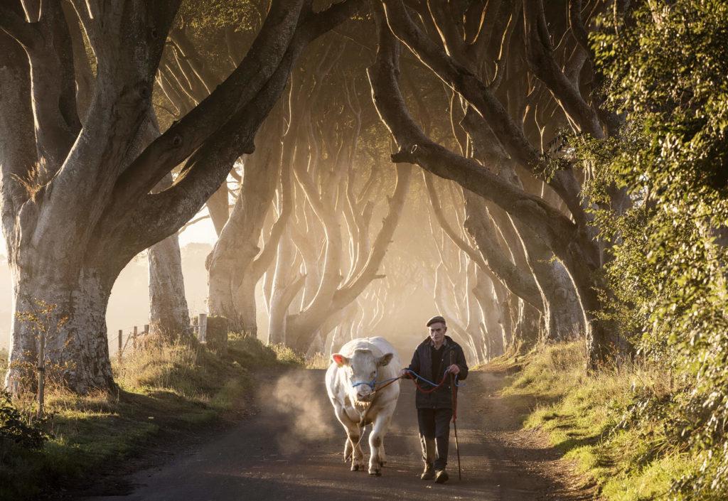 The Dark Hedges, Antrim, Northern Ireland © Tourism Ireland